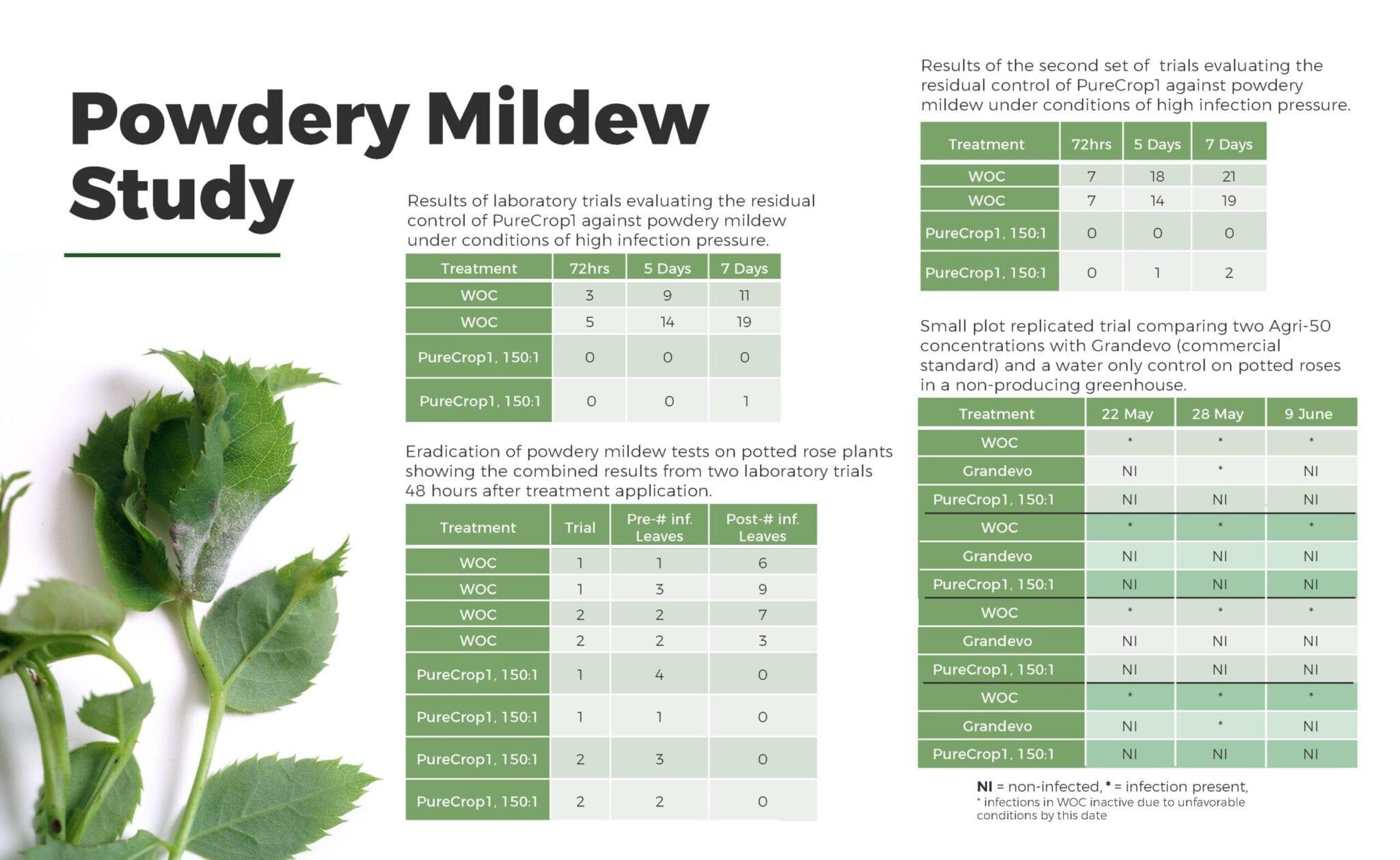 Powdery Mildew Studies